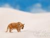 Carla Hegener Fotografie - Jaguar