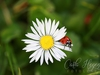 Carla Hegener Fotografie - Ladybird